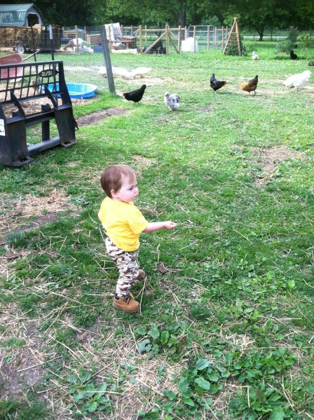 Feeding the Birds  Real Food in a Real World