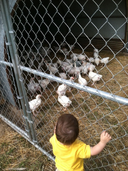Inspecting the chickens Real Food in a Real World